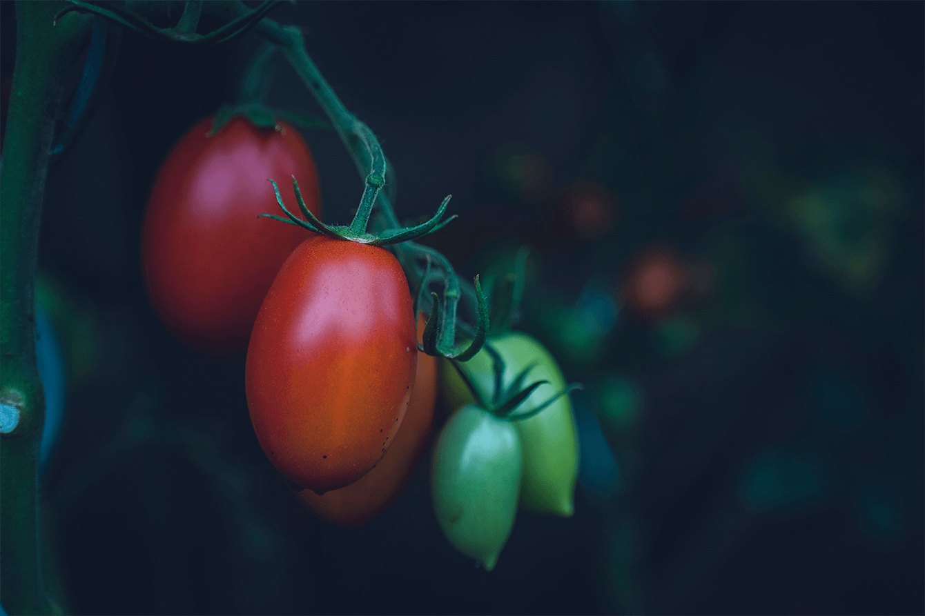 arctic- ce legume si fructe trebuie sa conservi 2