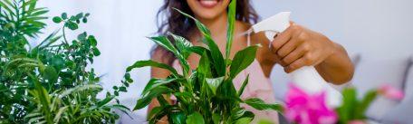 Cum ingrijesti plantele si florile de apartament