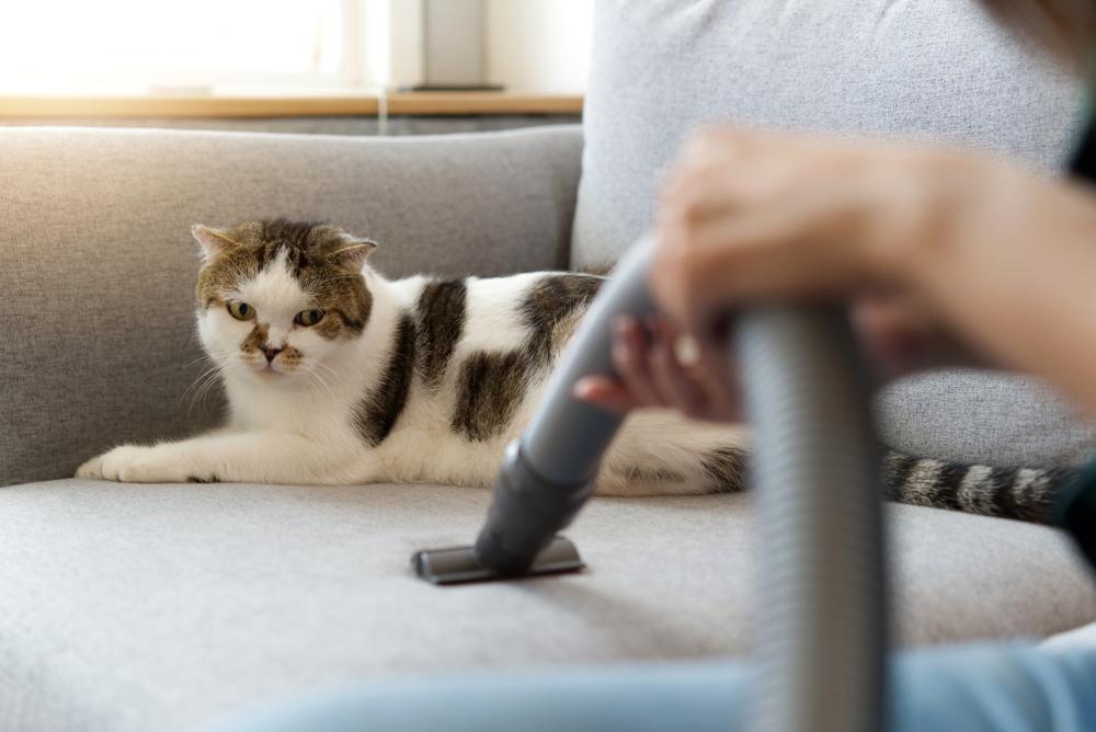 parul de pisica