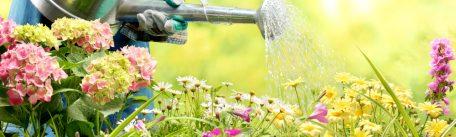 Cum ingrijesti o gradina cu flori: reguli si sfaturi utile