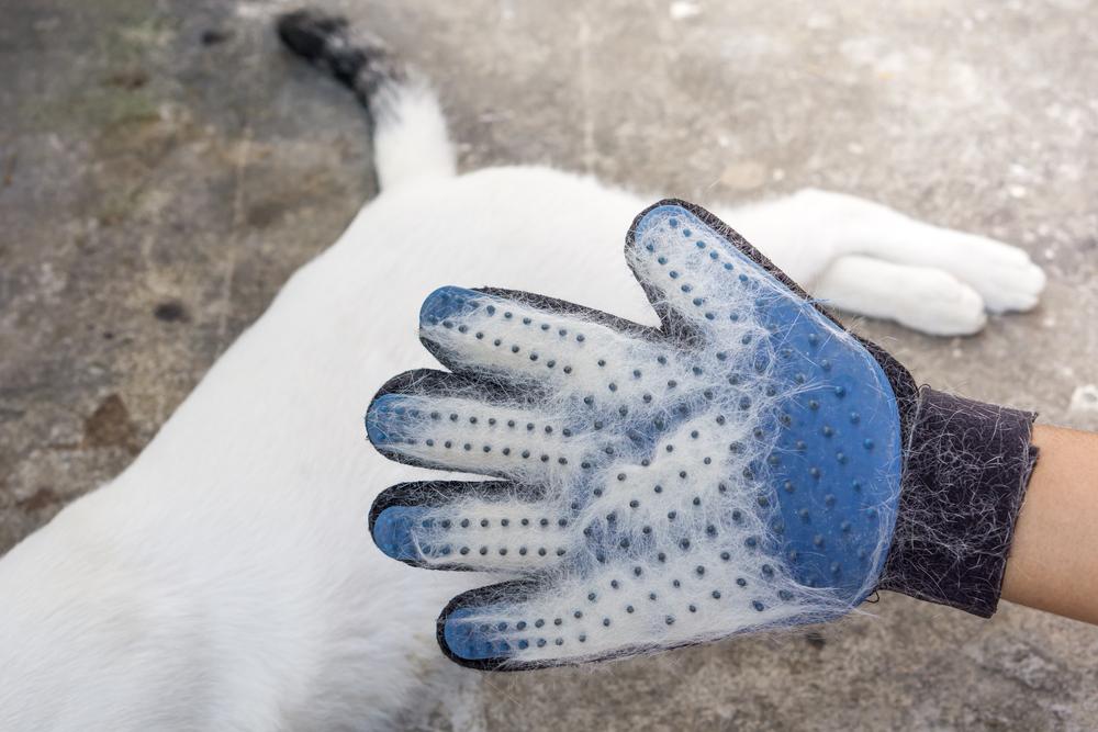 curatarea parului de animale cu manusa speciala
