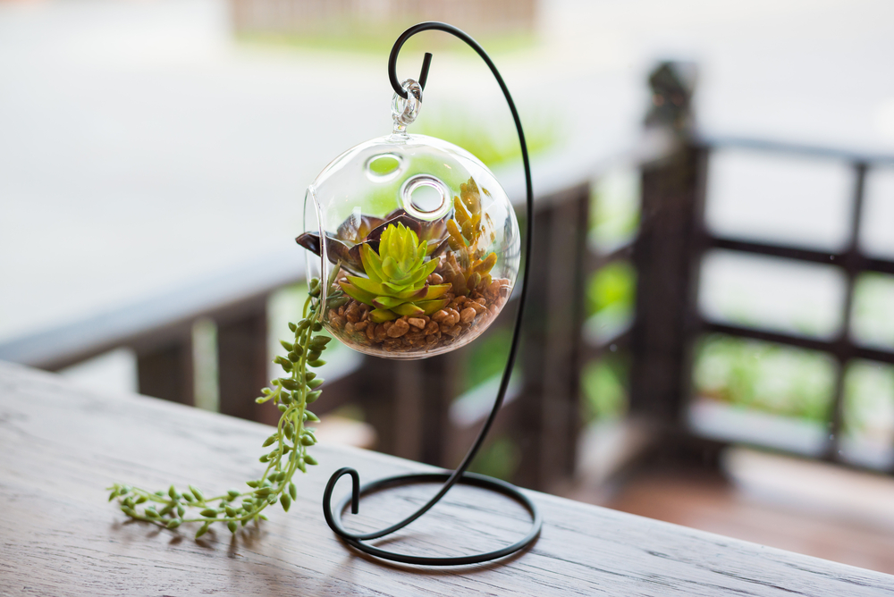 terrarium-cadou-casa-noua