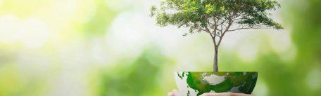Menajeaza mediul, prin 3 obiceiuri simple